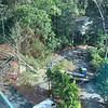 One morning I heard a loud noise, like thunder, and later realized a huge dead tree had fallen at the Radisson Summit.