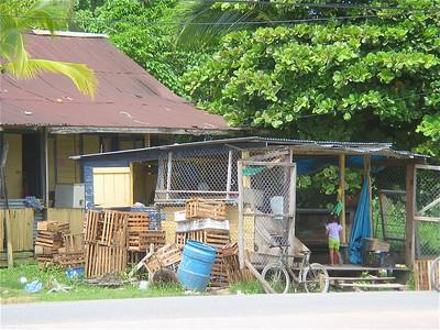 Bananas te koop! Bocas del Toro, Panama.