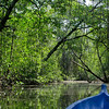Boat ride down mangrove-lined creek on Isla Bastimentos, Bocas del Toro, Panama.