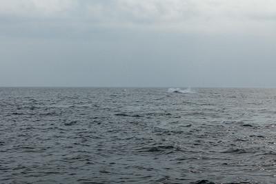 Whales - Ballenas Contadora