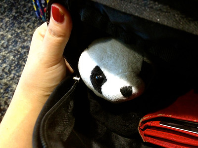 Panda stowing away in a bag for his trip to Nauru