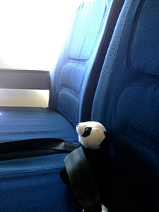 Panda scored a row to himself on the way home.