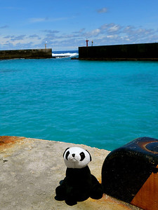 Panda just chilling at the Boat Harbour