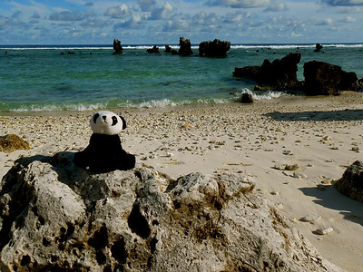 Panda just chilling on the beach