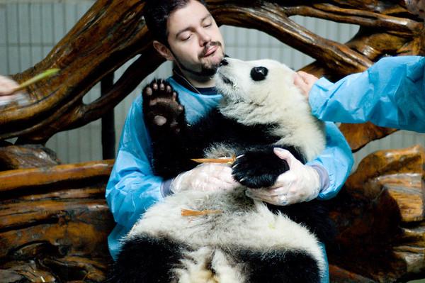 Panda Hunting in Chengdu