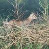 """<a href=""""https://salphotobiz.smugmug.com/Animals/Wildlife-around/i-7fvh49F"""">https://salphotobiz.smugmug.com/Animals/Wildlife-around/i-7fvh49F</a>"""
