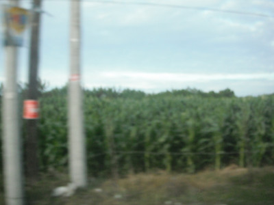I was suprised to see Corn here, which is grown 3x a year!...http://health.goodnewseverybody.com/foods.agriculture.html