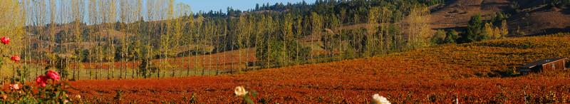 Navarro vineyards, Anderson Valley