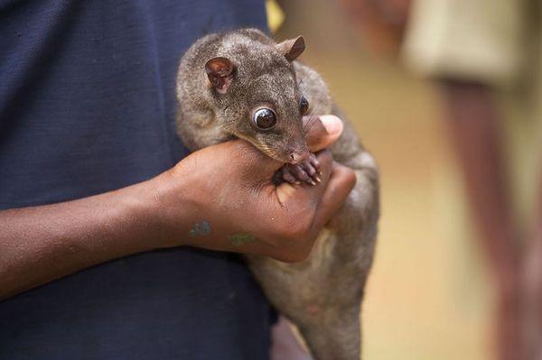 A girl holds a pet couscous