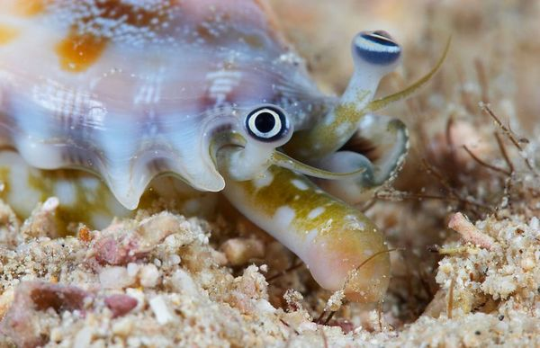A bizarre shell