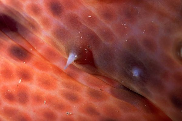 Detail from a sea cucumber