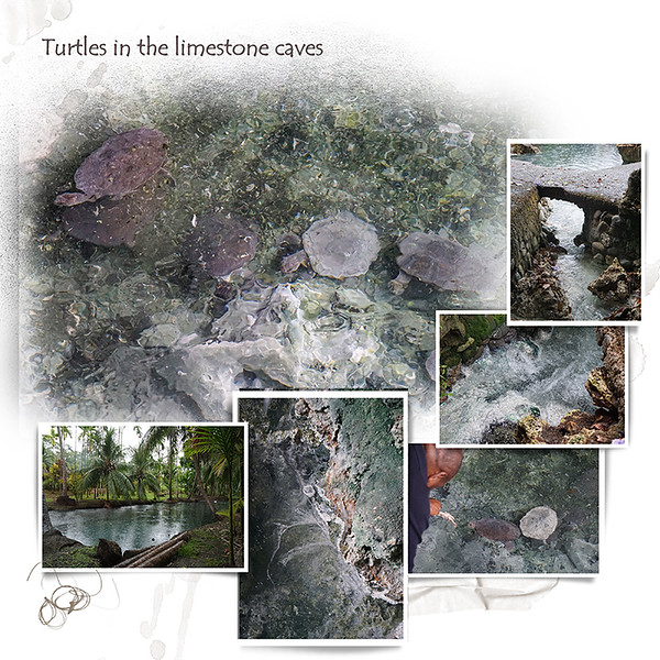 Day 07 I Turtles