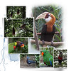 Day 09 B Madang to Rabaul
