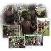 Day 11B N Warwagira Festival