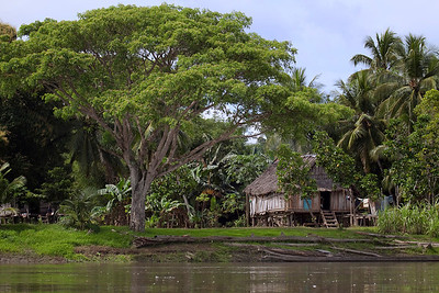 Huts along the banks of the Sepik River