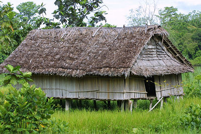 family home along the sepik river. The entire extended family lives here.