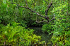 Interior of a mangrove forest ecosystem, Warironi, Yapen Island, Papua, Indonesia. [Papua Warironi 2009-01 203 YapenIs-Indonesia_TC]