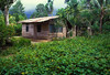 This is the little house we lived in for 15 years in Papua, Indonesia.