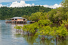 Planted mangrove seedlings behind Warironi Village, Papua, Indonesia, April 2013. [Papua Warironi 2013-04 013 YapenIs-Indonesia_V_TC]