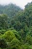 Rainforest on lower slopes of Mt. Cyclops, from Lower Falls, Sentani, Papua, July 2009. [Cyclops Falls 2009-07 008_TM Sentani-Papua]