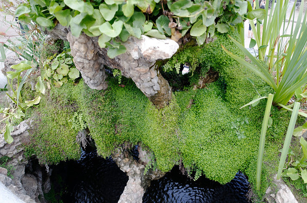 Moss in the right place can be so lovely.