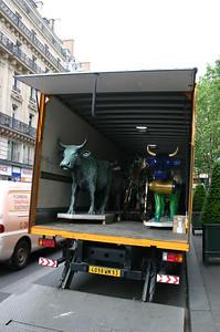 Kirjud lehmad autos