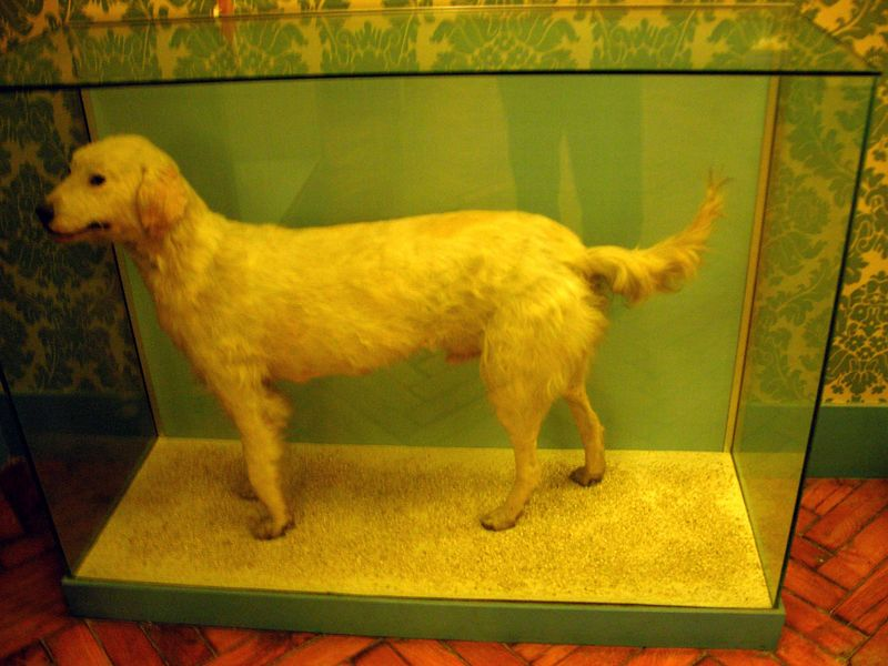Napoleon's Dog which