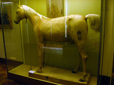 Napoleon's horse Le Vizir, stuffed and displayed in the Musee de l'Armee