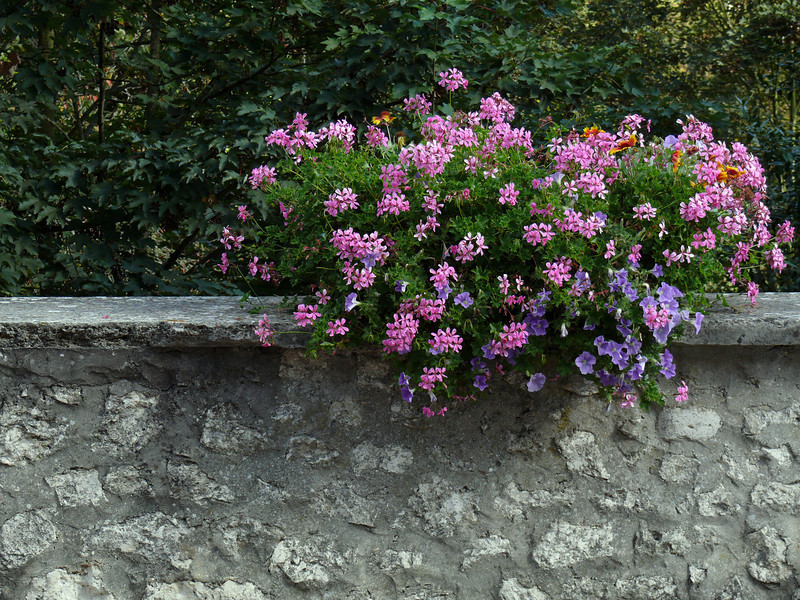 Flowers along the streets everywhere- Provins, France