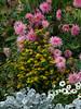 Garden flowers- Fontainbleau
