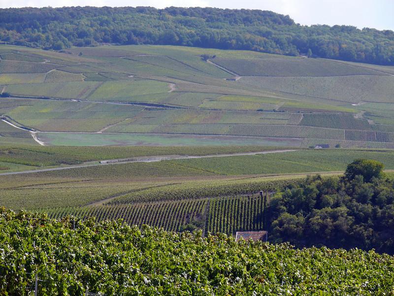 Vinyards just outside Epernay, France