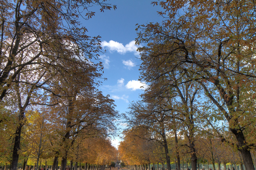 A path in the Luxembourg gardens