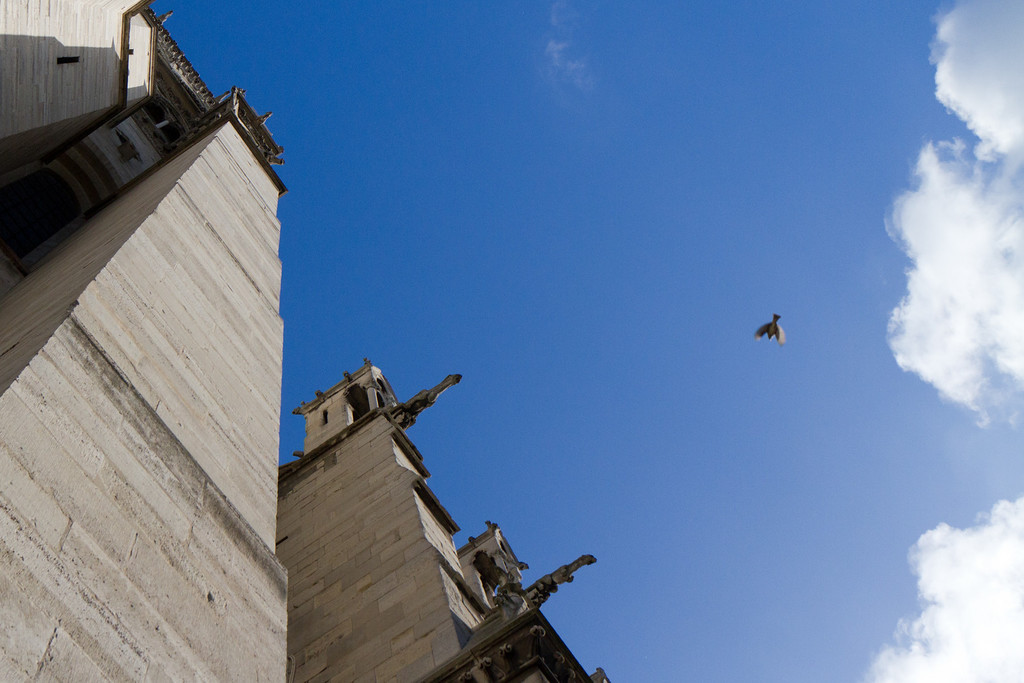 Gargoyle waterspouts on Notre Dame seem to be reaching for the bird in flight