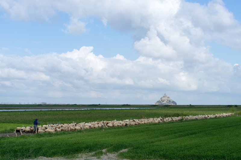 Sheep herded with Mont St Michel in the background. Seeing the Mont rising up in the distance must have been an inspirational site to medieval pilgrims