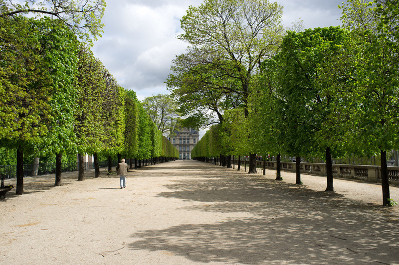 Formal french gardens in the Tuileries