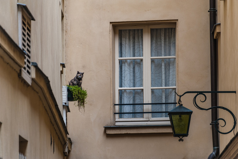 A cat on a balcony looking on Notre Dame