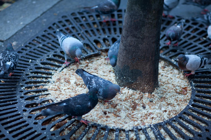 Even the pigeons look well fed.