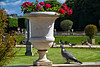 Rock pigeon and urn, Luxembourg Gardens, Paris, France