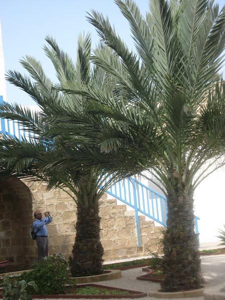 Haifa 2011 273