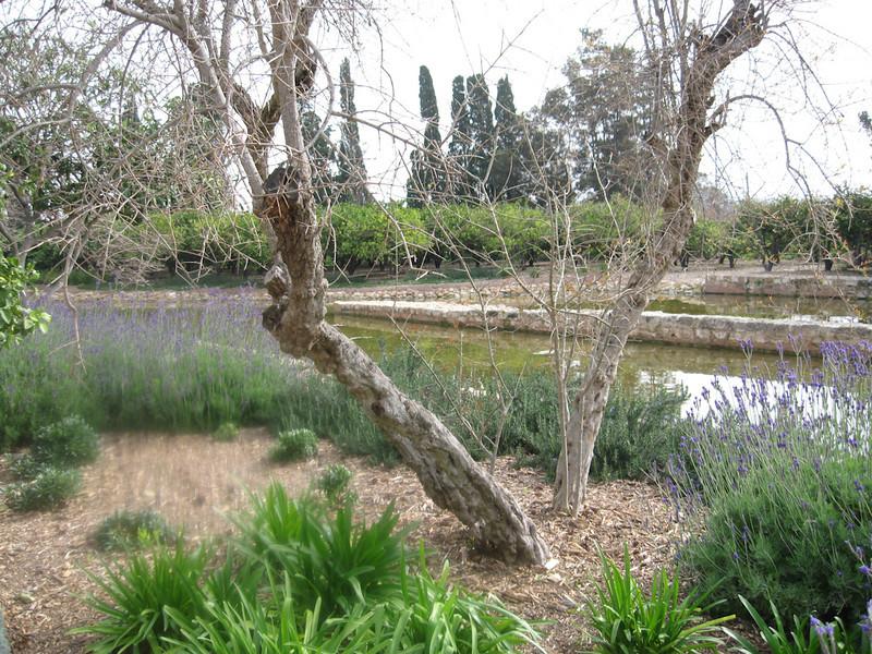 Haifa 2011 256