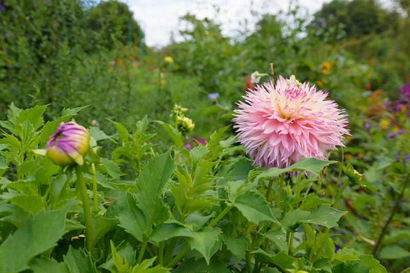 Claude Monet's garden at Giverny