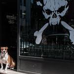 Hund i tatovørbutik