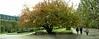 Paris, France, Public Parks, Jardin des Plantes, in Autumn, People Promenading, Panoramic VIew
