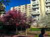 Paris, France. Urban Park Scenes in Spring, Belleville District