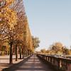 gold autumn leaves and trees Jardin des tuileries, Paris