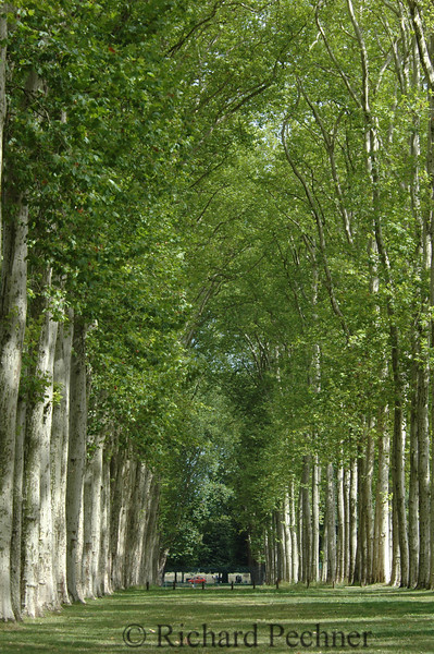 Tree lined meadow at Versailles