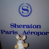 Stowaway Marcy at the airport Sheraton.