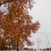fall trees and ferris wheel at place de la concorde, paris