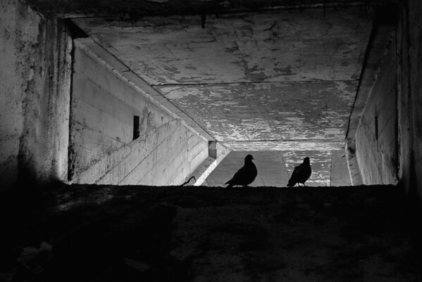 Pigeons Under a Paris Bridge