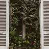 exterior of window filled with green plants